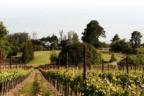 larue wines